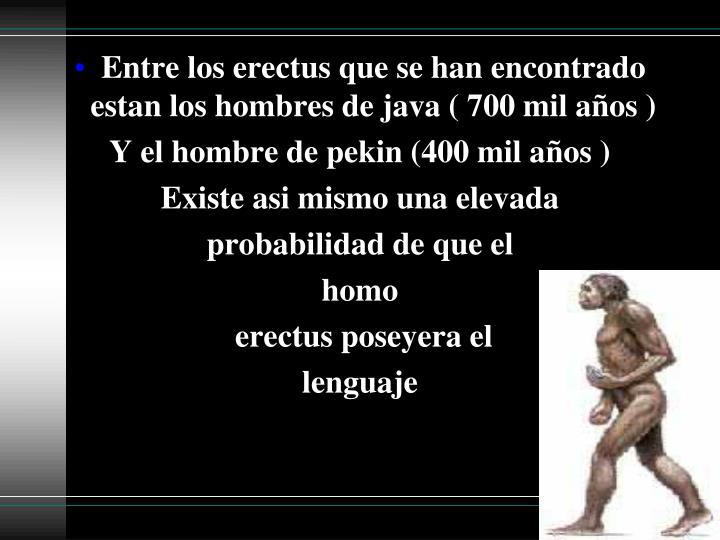 Entre los erectus que se han encontrado estan los hombres de java ( 700 mil años )