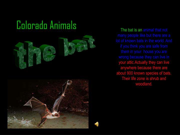 The bat is an