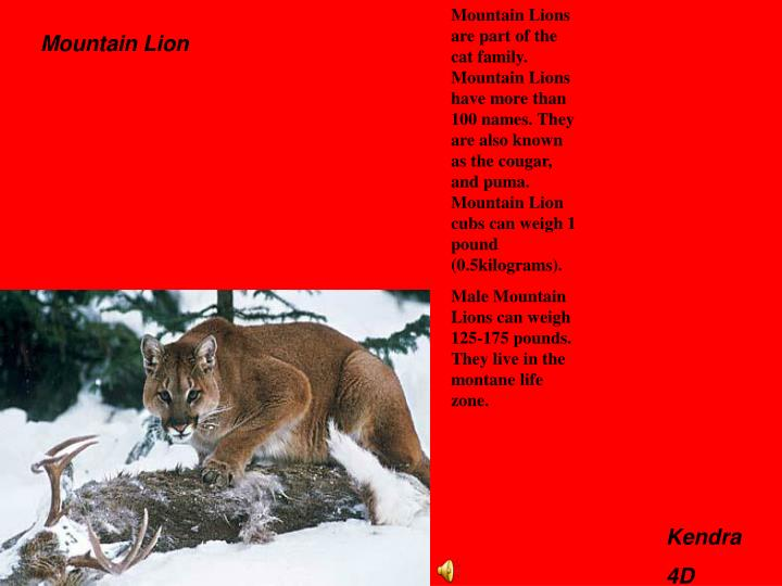 Mountain Lions are part of the cat family. Mountain Lions have more than 100 names. They are also known as the cougar, and puma.  Mountain Lion cubs can weigh 1 pound (0.5kilograms).