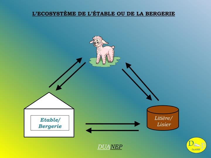 L'ECOSYSTÈME DE L'ÉTABLE OU DE LA BERGERIE