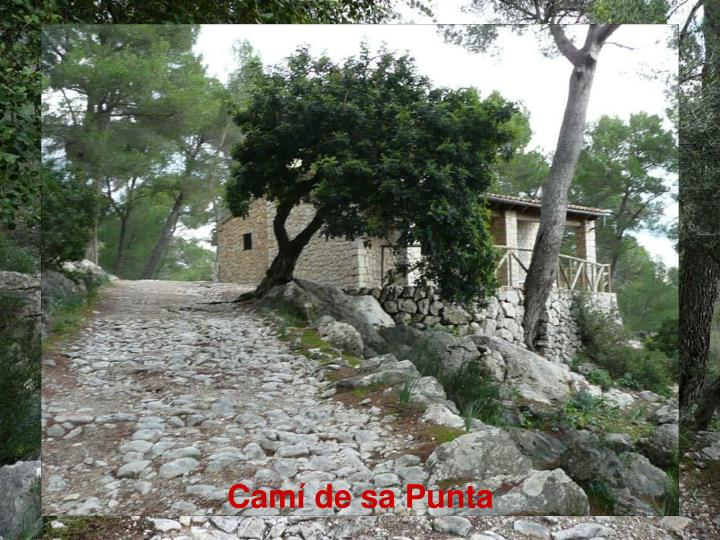 Camí de sa Punta