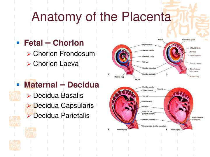 Placenta: structure, development and function 99