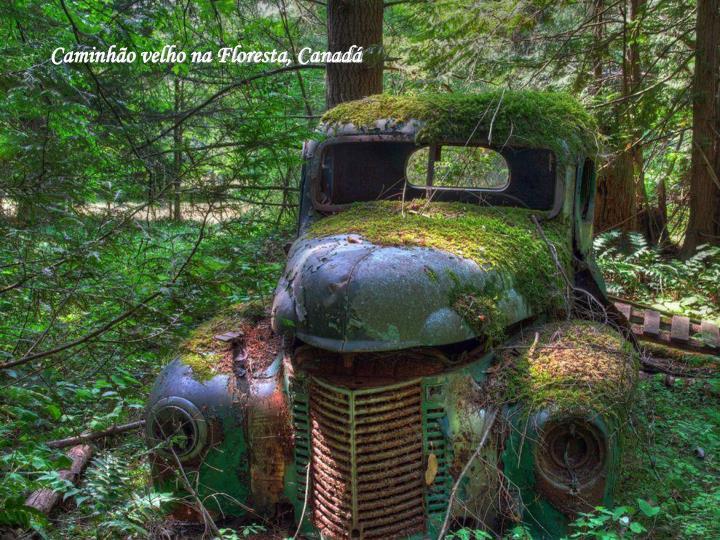 Caminhão velho na Floresta, Canadá