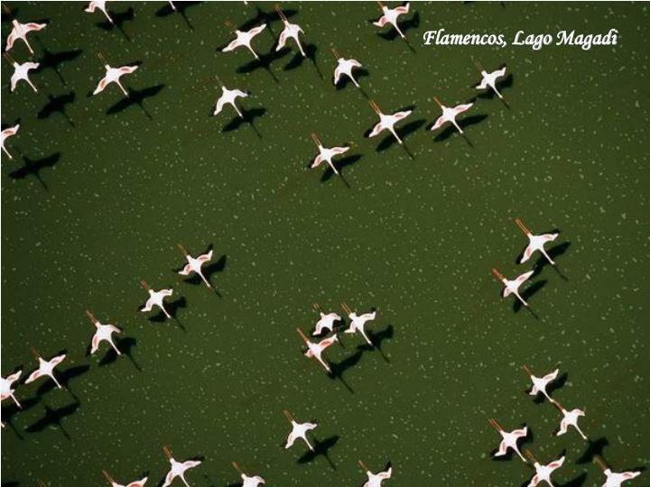 Flamencos, Lago
