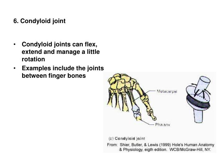 6. Condyloid joint
