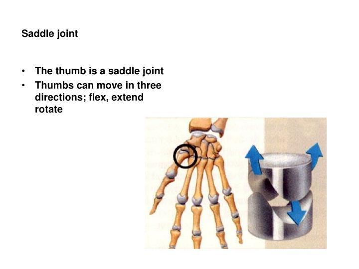 Saddle joint
