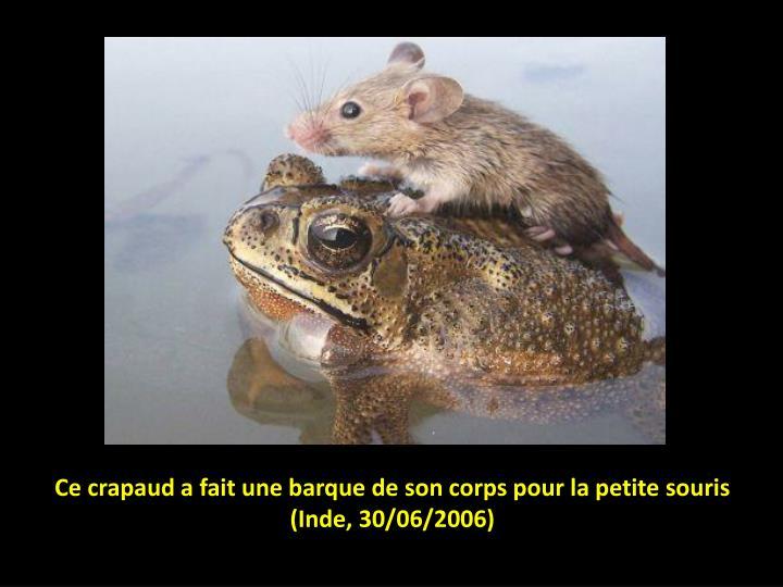 Ce crapaud a fait une barque de son corps pour la petite souris inde 30 06 2006