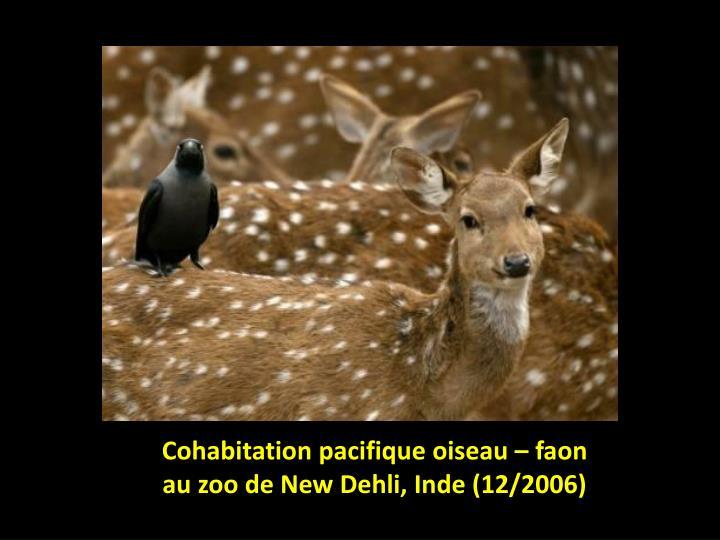 Cohabitation pacifique oiseau – faon