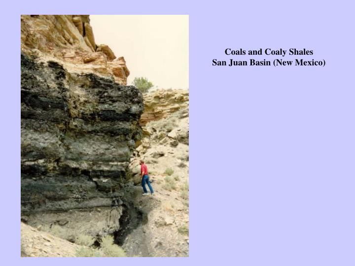 Coals and Coaly Shales