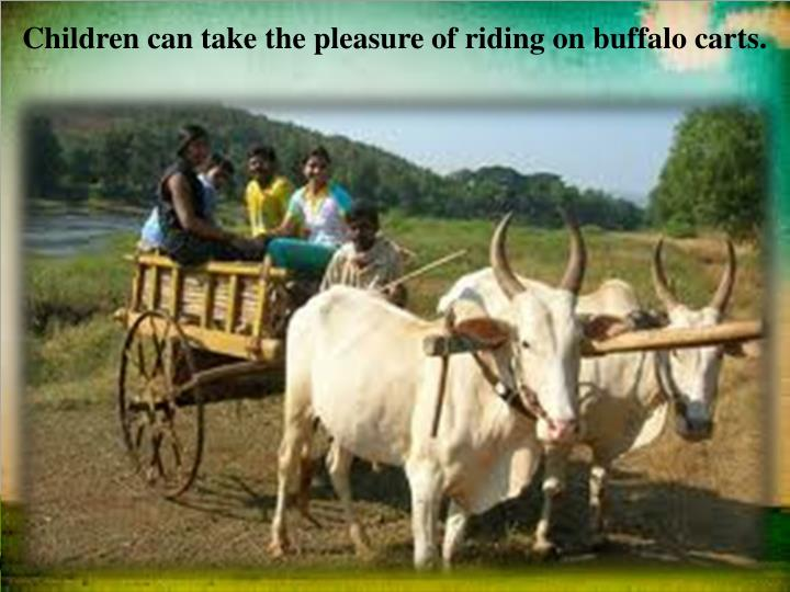 Children can take the pleasure of riding on buffalo carts.