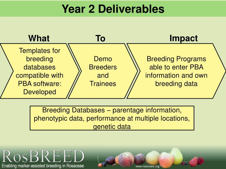 Year 2 Deliverables