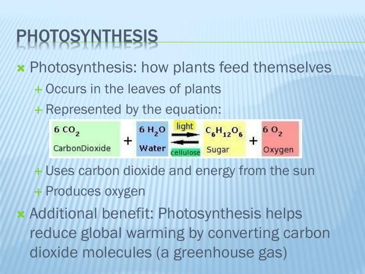 Photosynthesis: how plants feed themselves