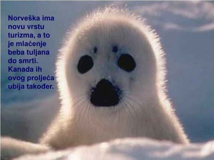 Norveška ima novu vrstu turizma, a to jemlaćenje beba tuljana do smrti. Kanada ih ovog proljeća...