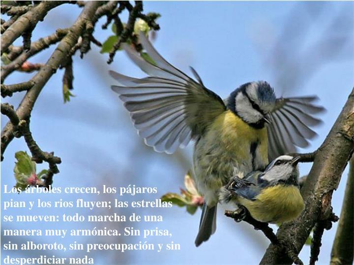 Los árboles crecen, los pájaros pian y los rios fluyen; las estrellas se mueven: todo marcha de una manera muy armónica. Sin prisa, sin alboroto, sin preocupación y sin desperdiciar nada