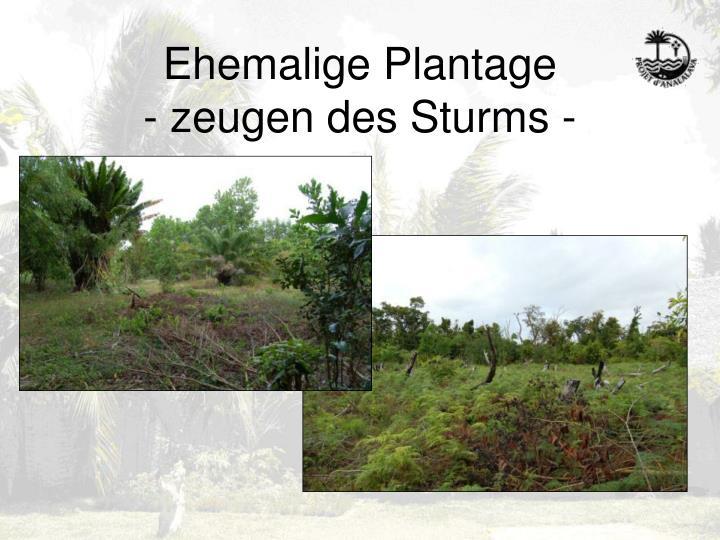 Ehemalige Plantage