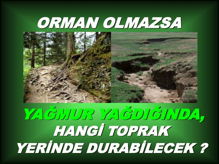 ORMAN OLMAZSA