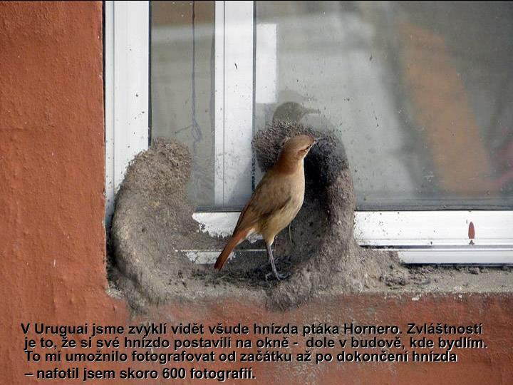 V Uruguai jsme zvyklí vidět všude hnízda ptáka H