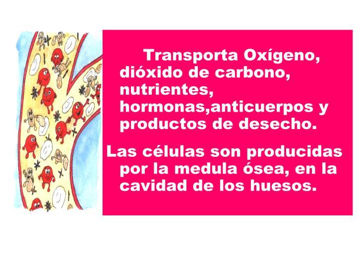 Transporta Oxígeno, dióxido de carbono, nutrientes, hormonas,anticuerpos y productos de des...