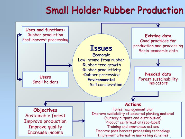 Small Holder Rubber Production