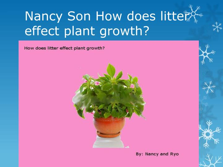 nancy son how does litter effect plant growth n.