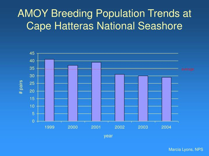 Amoy breeding population trends at cape hatteras national seashore