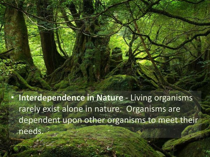 Interdependence in Nature