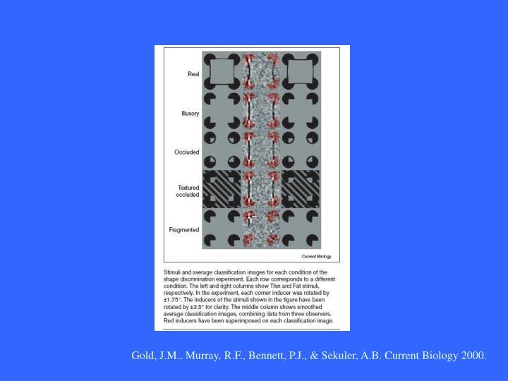 Gold, J.M., Murray, R.F., Bennett, P.J., & Sekuler, A.B. Current Biology 2000.
