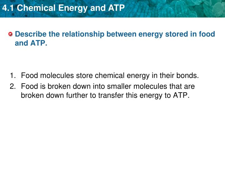 Describe the relationship between energy stored in food and ATP.