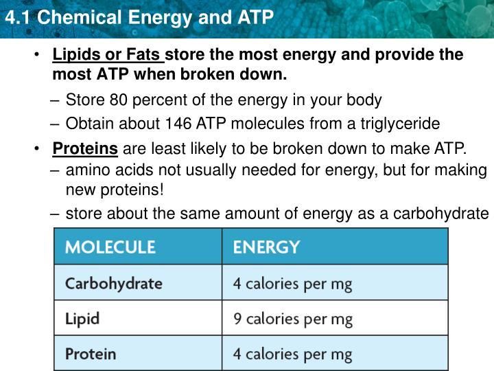 Lipids or Fats