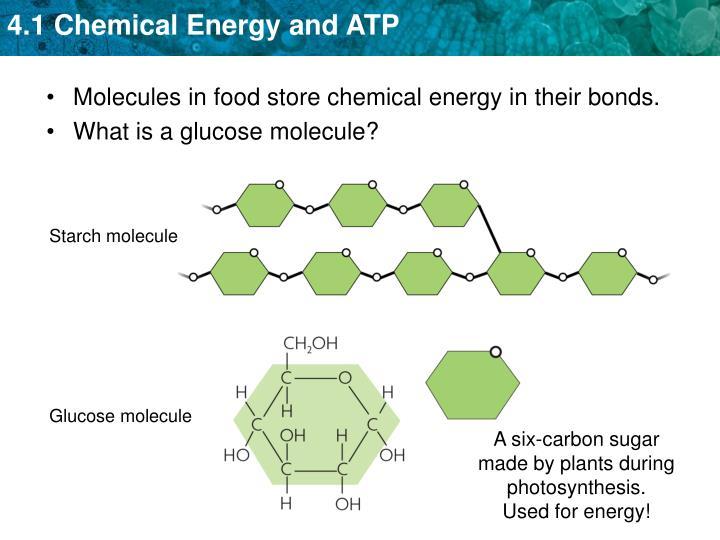 Starch molecule