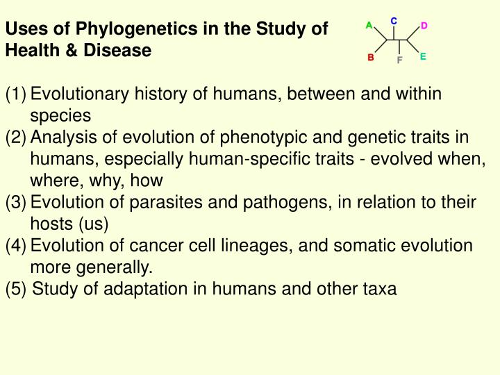 Uses of Phylogenetics in the Study of