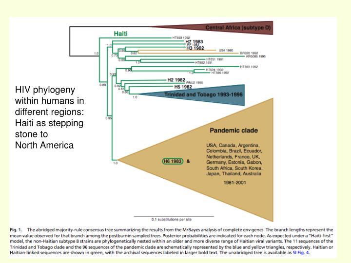 HIV phylogeny