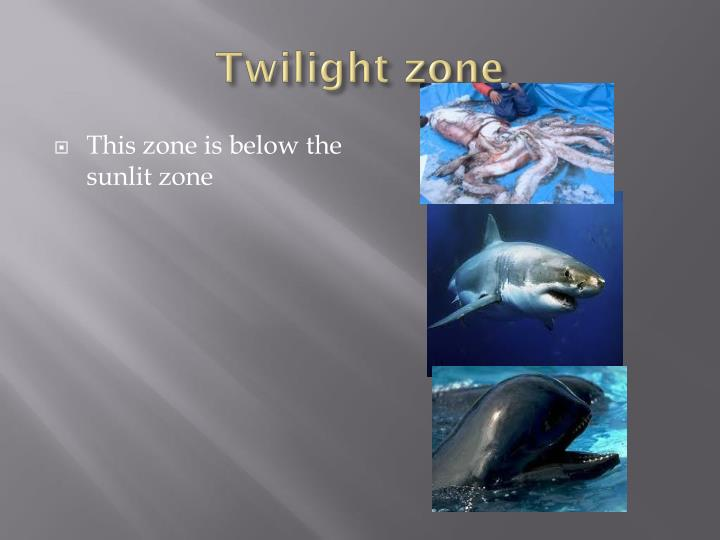 Ppt zones of the ocean powerpoint presentation id 5317054 for Twilight zone fish