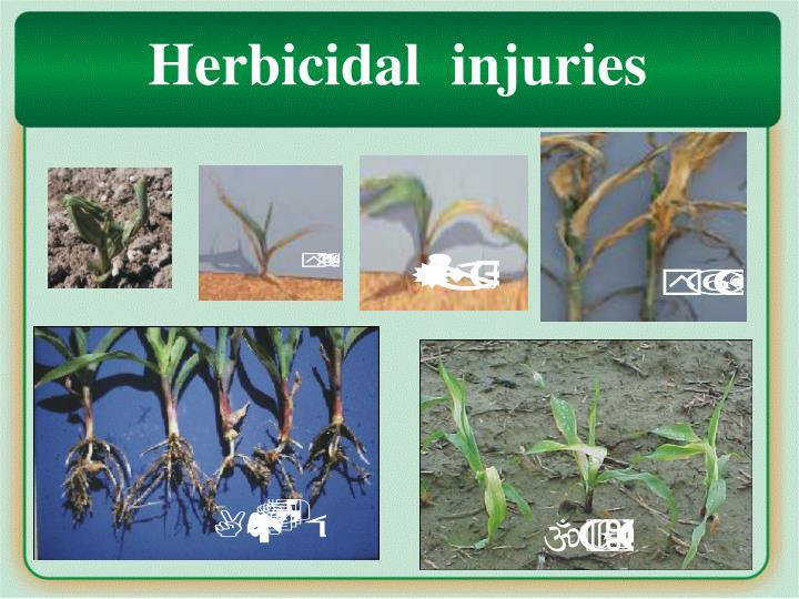 Herbicidal  injuries