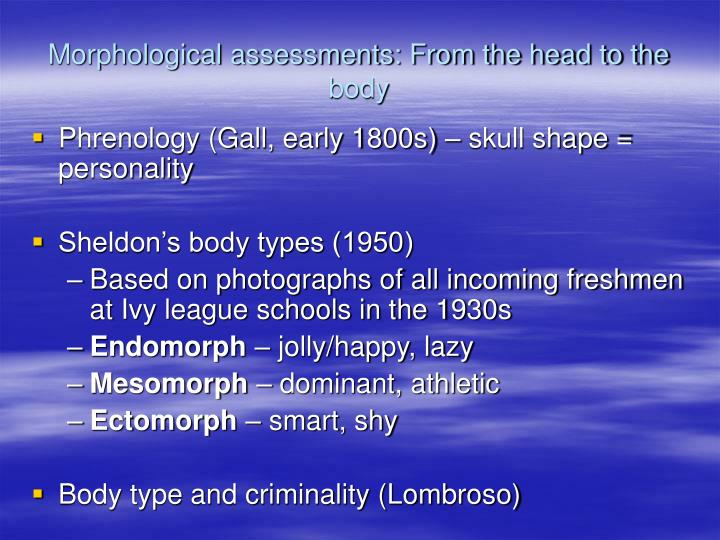 morphological assessments from the head to the body n.
