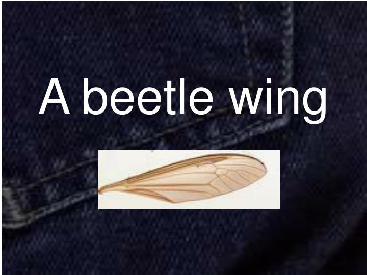 A beetle wing