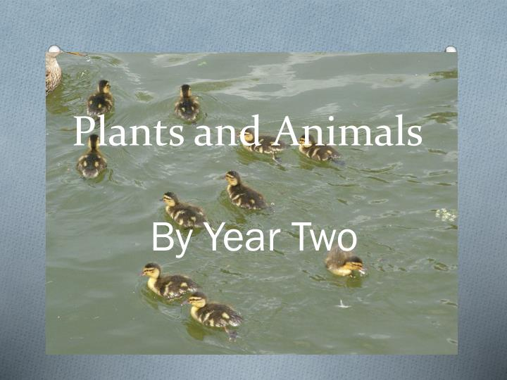 plants and animals n.