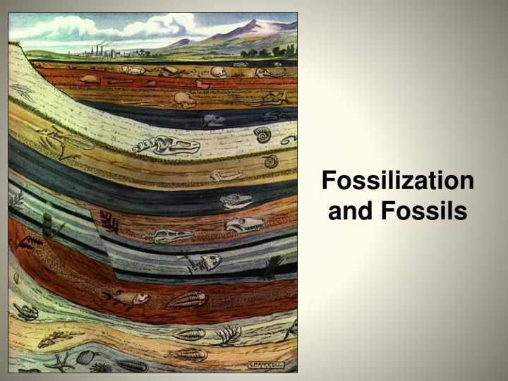 fossilization and fossils n.