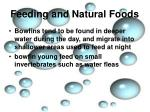 feeding and natural foods3