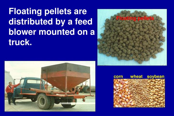 Floating pellets are