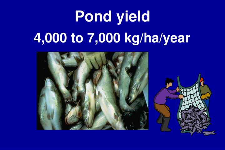 Pond yield