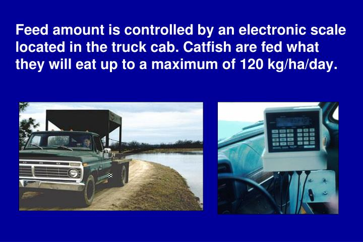 Feed amount is controlled by an electronic scale