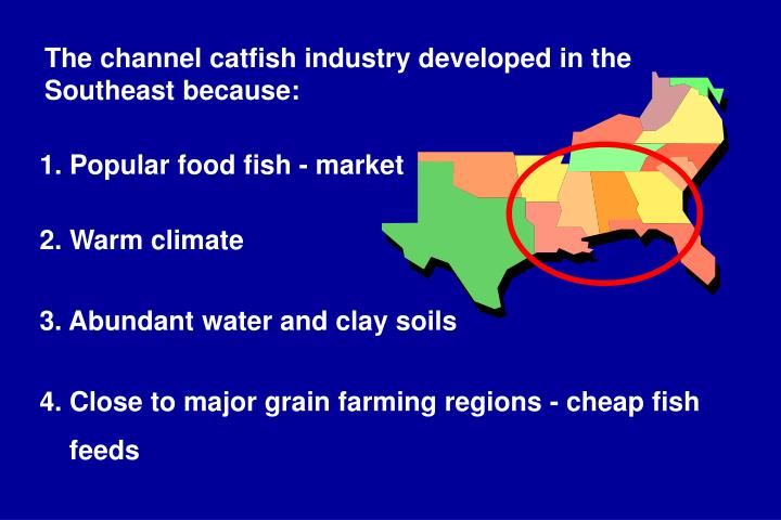 The channel catfish industry developed in the