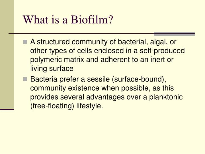 What is a biofilm