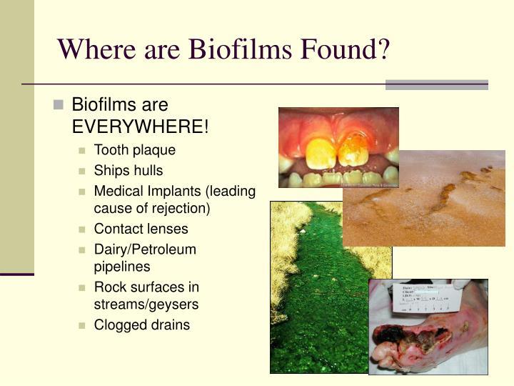 Where are Biofilms Found?