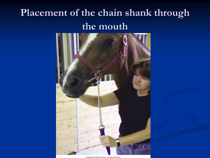 Placement of the chain shank through the mouth