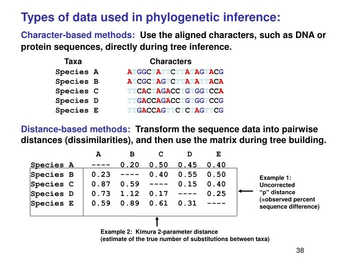 Types of data used in phylogenetic inference: