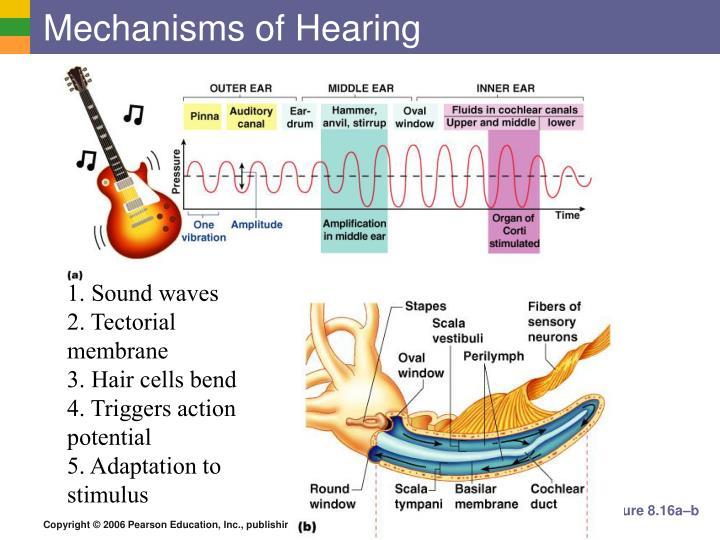 Mechanisms of Hearing
