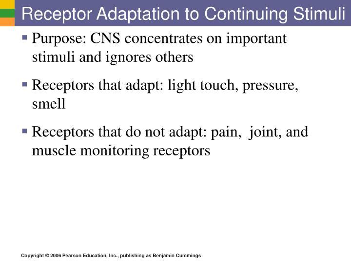 Receptor adaptation to continuing stimuli