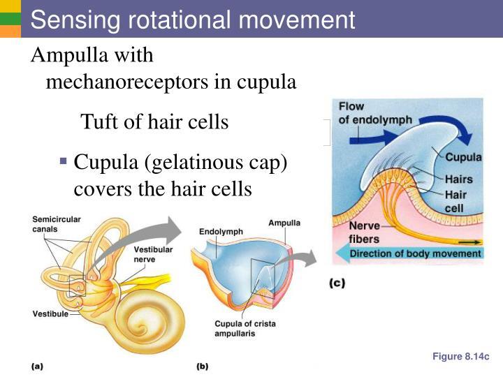 Sensing rotational movement